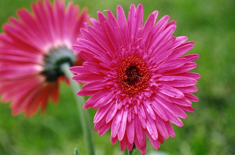 Flower011e (339)