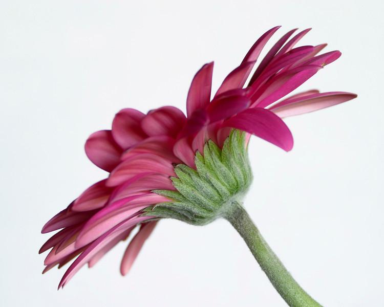Flower011a - (043)