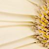 Flower063d (Daisy)