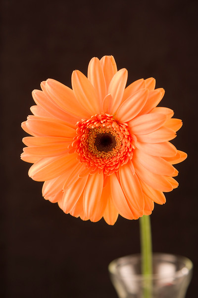 Flower054d (Daisy)