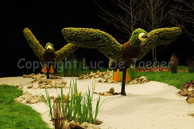 The Ghent Floralies (Gentse Floraliën), Belgium, display highly innovative and stunning botanical and horticultural creations. It's a treasure for the eyes.