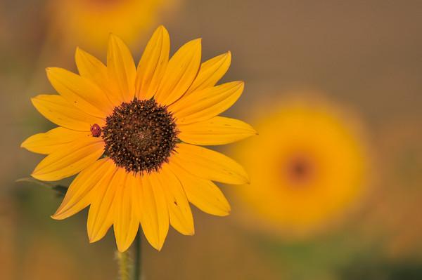 Ladybug, ladybug, please fly to my home!