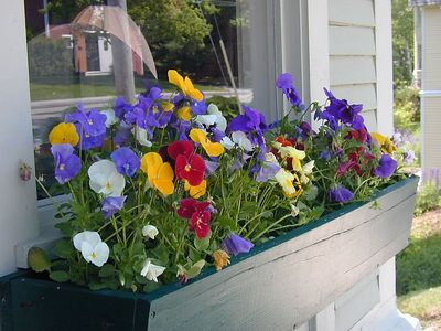 Rockport Window box ~ Maine / 2