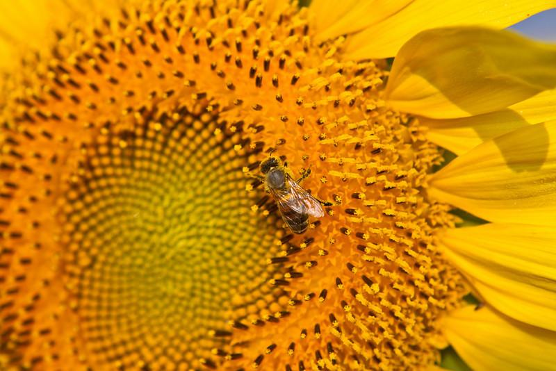 morning pollination