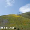 Gorman Hills wildflowers-7