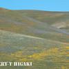 Gorman Hills wildflowers-15