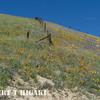 Gorman Hills wildflowers-8