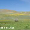 Gorman Hills wildflowers-9