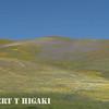 Gorman Hills wildflowers-13