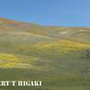 Gorman Hills wildflowers-14