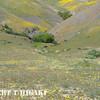 Gorman Hills wildflowers-4