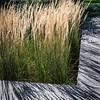 Grasses-05732