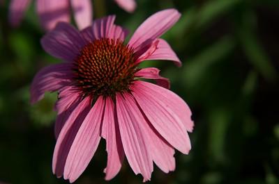 Petals of flower