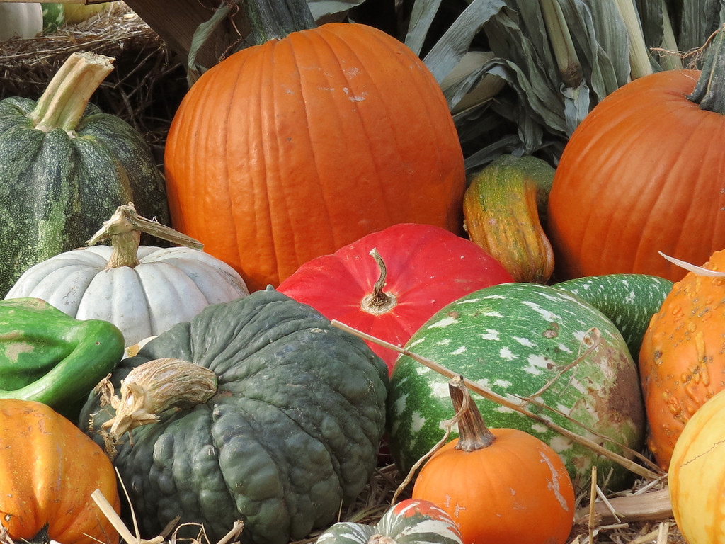 Pumpkins and gourds.