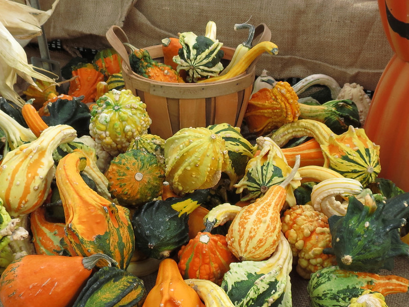 A nice variety of gourds.