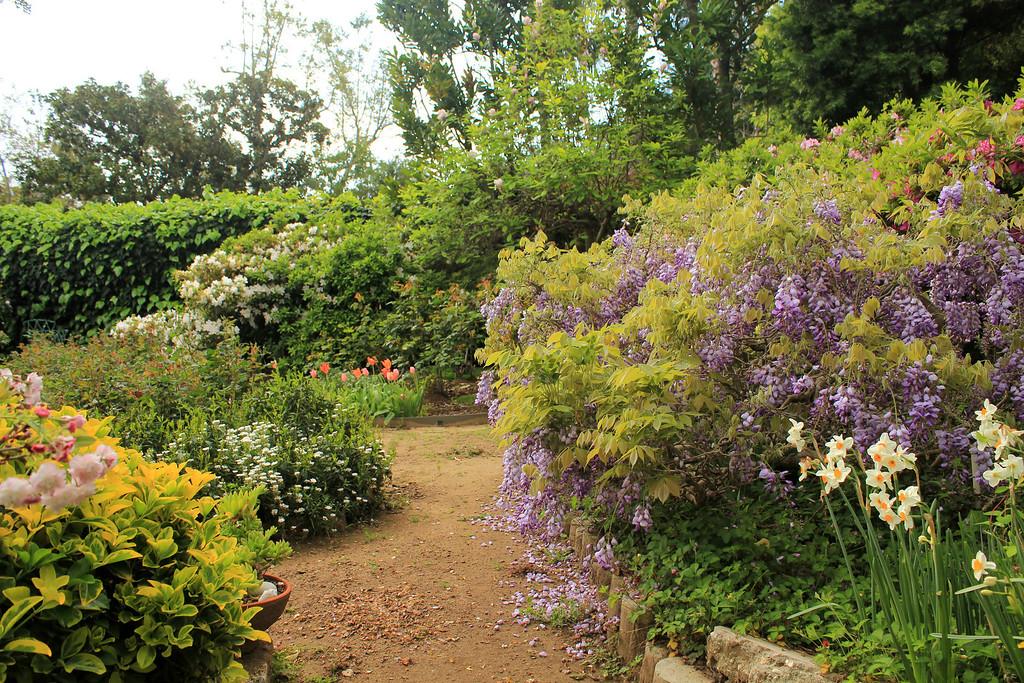 may-june back garden