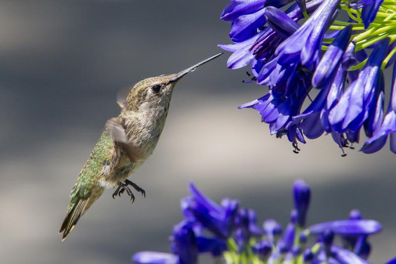 IMAGE: http://www.palermini.com/Flowers/Huntington-Gardens/i-dRBQcds/0/L/MB9812-L.jpg