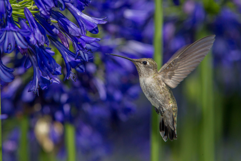 IMAGE: http://www.palermini.com/Flowers/Huntington-Gardens/i-xkZm2kv/0/L/MB9286-L.jpg