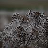 Ice Flower (15)