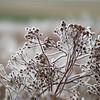 Ice Flower (16)