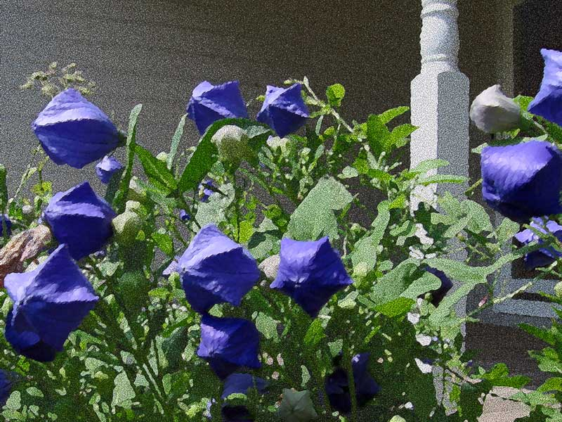 Very blue Balloon flowers and porch post.<br /> I haven't been able to take a good picture of these flowers<br /> and I don't think I will keep this one either.