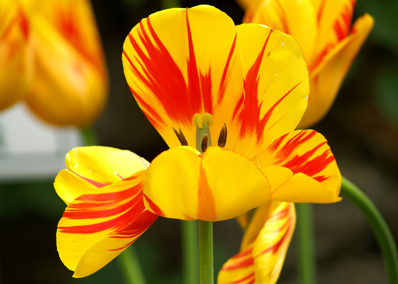 Spring Fades