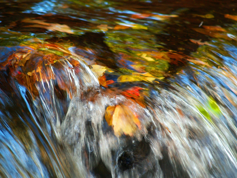 Waterfalling Leaves