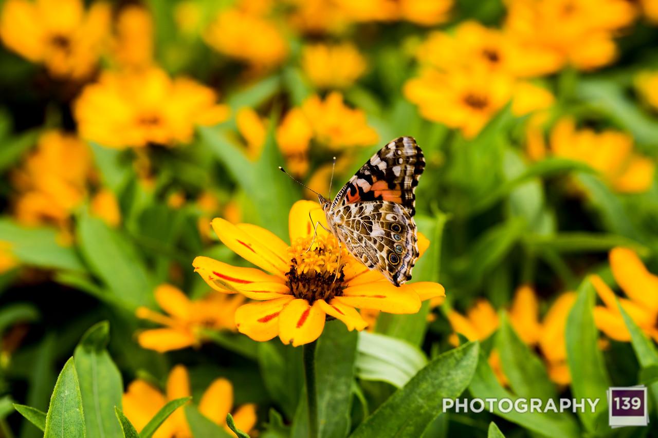 Iowa State Fair Discovery Garden - 2019