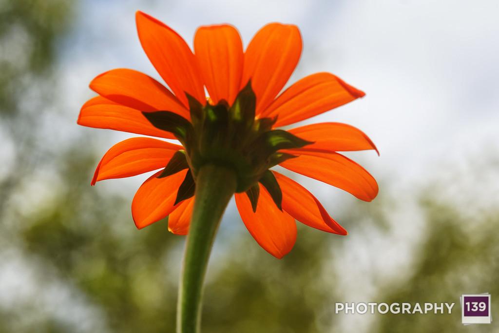 Discovery Garden Flower
