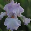 IRIS_Flower_vuillerens_01062012_0058