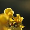 IRIS_Flower_vuillerens_01062012_0156