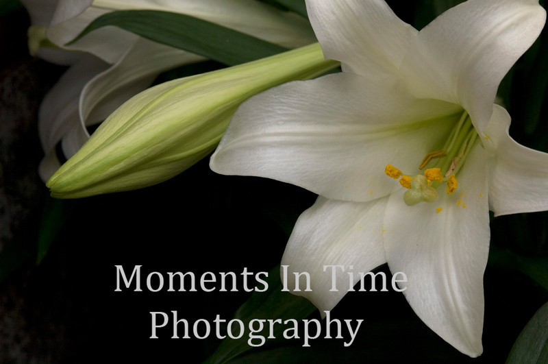 Easter lily standout