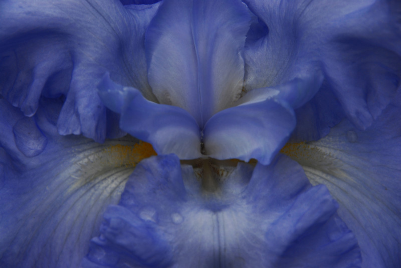 Iris - On Angels Wings_edited-1