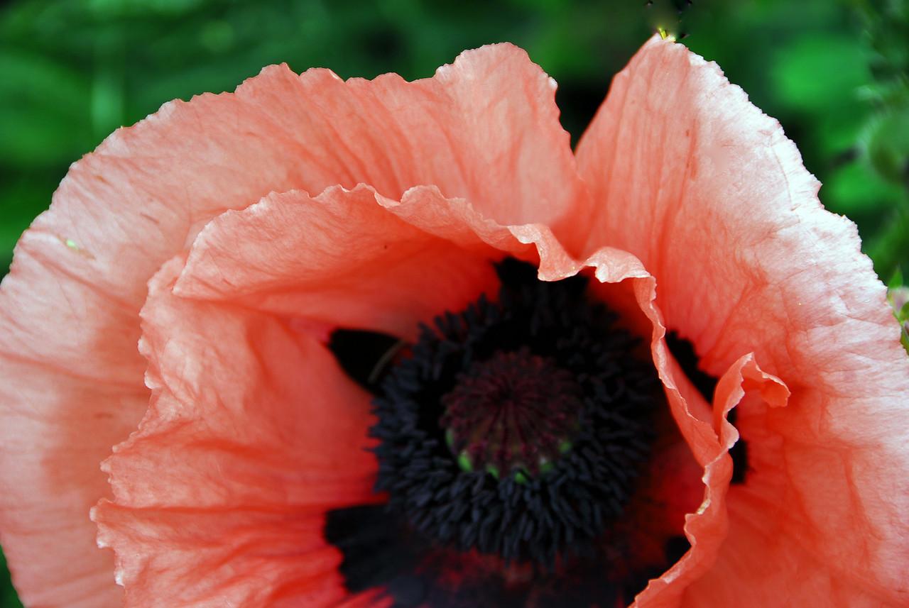 Poppy - The Inside Story