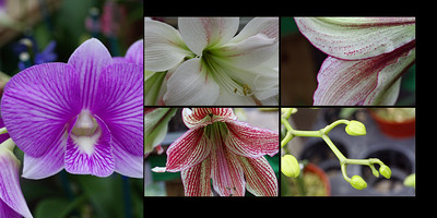 Flowers 014 (Sides 26-27)