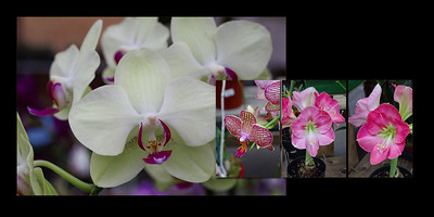 Flowers 012 (Sides 22-23)