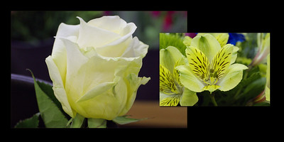 Flowers 006 (Sides 10-11)