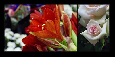Flowers 004 (Sides 6-7)