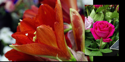 Flowers 005 (Sides 8-9)