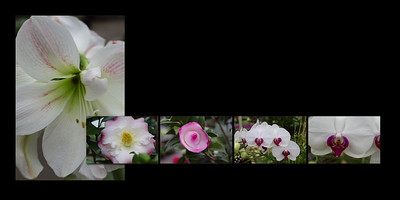 Flowers 015 (Sides 28-29)
