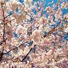 IMG_4958 - 2012-04-08 at 11-14-32