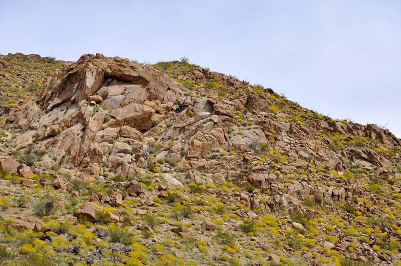 Wildflowers and Rocks, Joshua Tree National Park