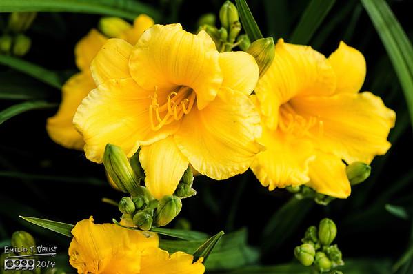 June-July 2013 Flowers