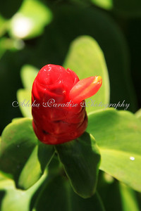 RED FLOWER WITH BEAK
