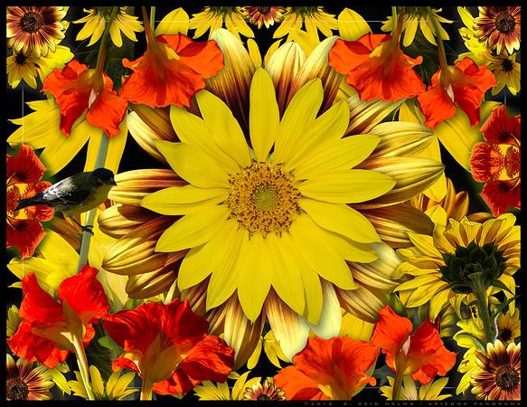 2018 Sunflower Collage