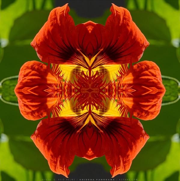 Nasturtium Kaleidoscope