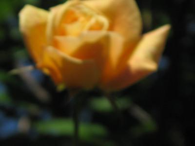 Karen's Flowers May 2010