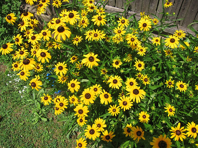 Karen's Flowers