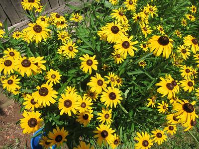 Karen's Latest Flowers