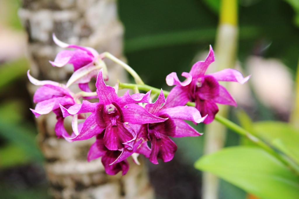 WildPink Orchids